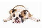 Some Canine Health Conditions You Must Know About