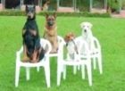 10 Week Basic Dog Obedience Training Programme