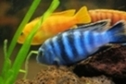 Selecting Tropical Freshwater Fish To Suit You