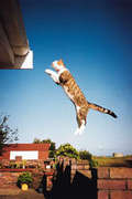 catapulting cat