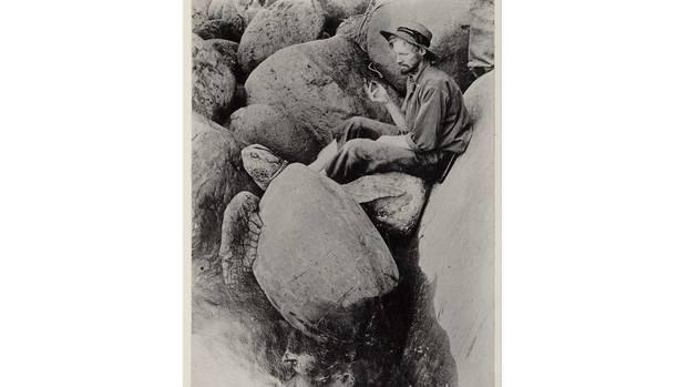 1 WilliamKingBell with turtle 1908 Raoul Island 01