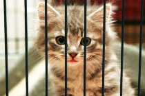 10036-Cat_in_a_Cage