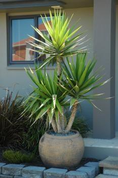 1eec12fa75663a559bd107c6d3e287aa-potted-trees-pot-plants