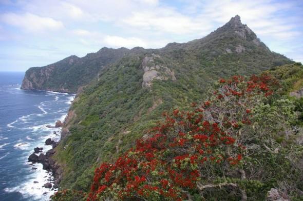 222-Taranga-Hen-Island-590×392