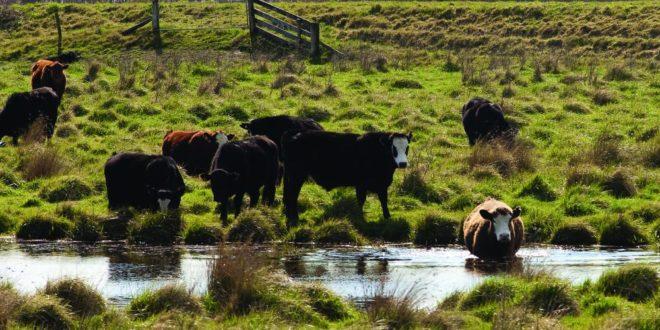 2_wetland_cows_wairarapa_credit_dave_allen_niwa_r