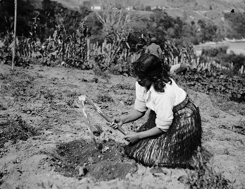 3_maori-woman-usingatimo-gardening-te-papa-800×615