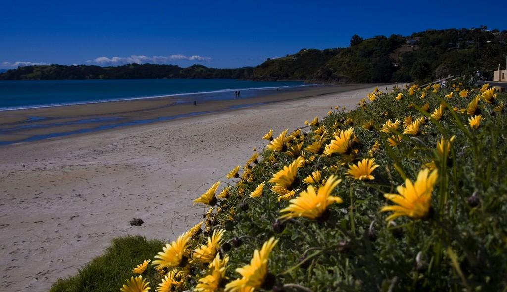 5432-Onetangi_beach-waiheke-island-87655678