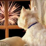 8282 West Highland Terrier