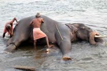 8722-Elephant_Washing