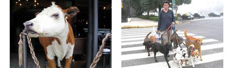 9056-animals