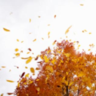 9722 autumn