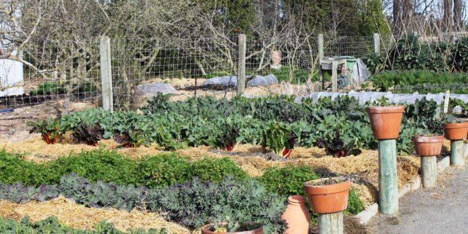 Self-guided edible garden tour - GrownUps New Zealand