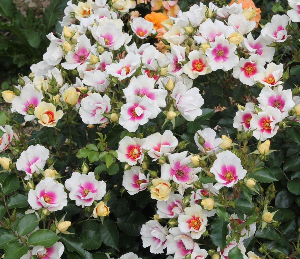 Floranza Eye Popping. Photo credit: Hayden Foulds
