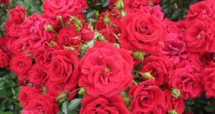 Floranza George Best