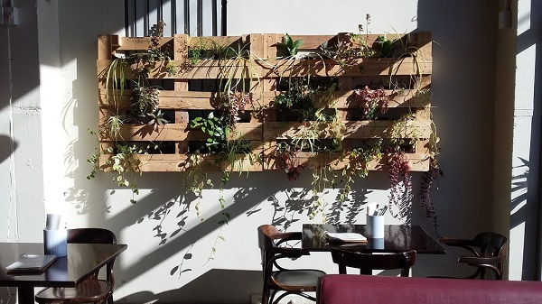 Gorgeous sunny grow walls in Wellintons Trattoria cafe.