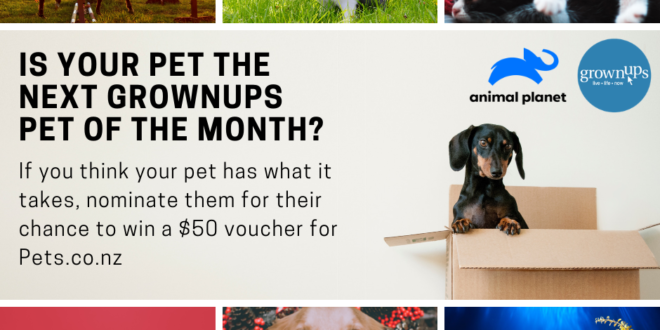 GrownUps Pet of the Month 1