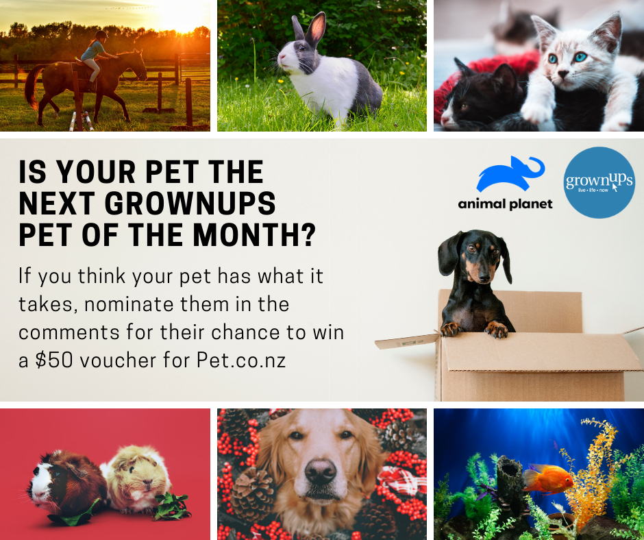 GrownUps Pet of the Month