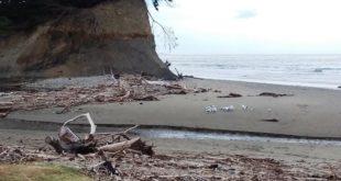 Hampden beach