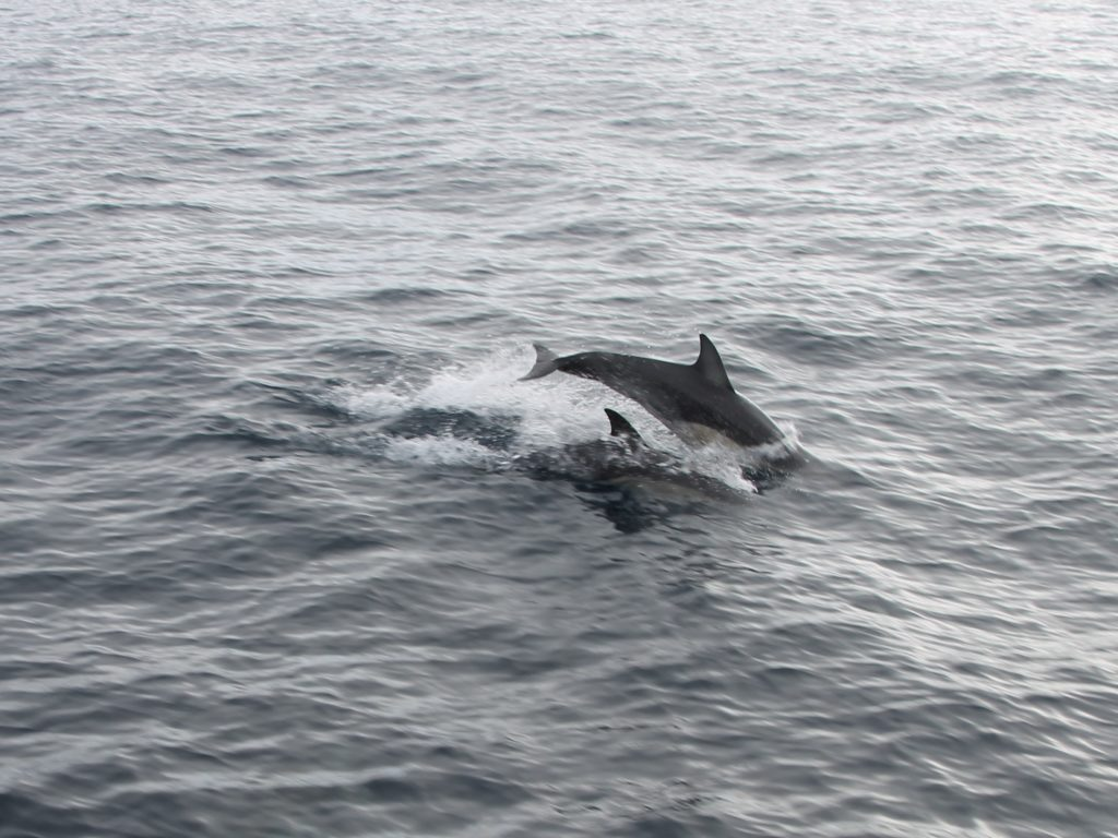 Its not uncommon to spot dolphins while aboard the boat.