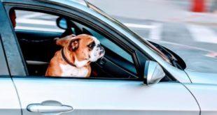 Dog, car, travel