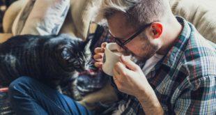 cat, coffee