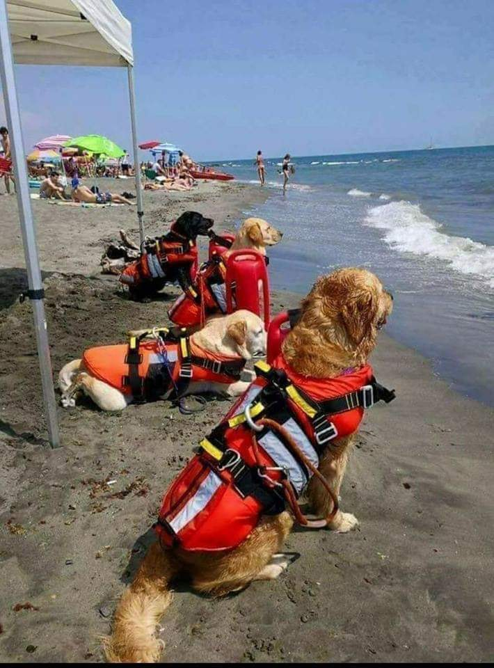 Lifeguard dogs in Croatia 04124389376 n