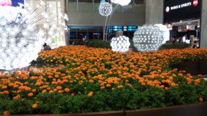 Massed marigold garden of lights