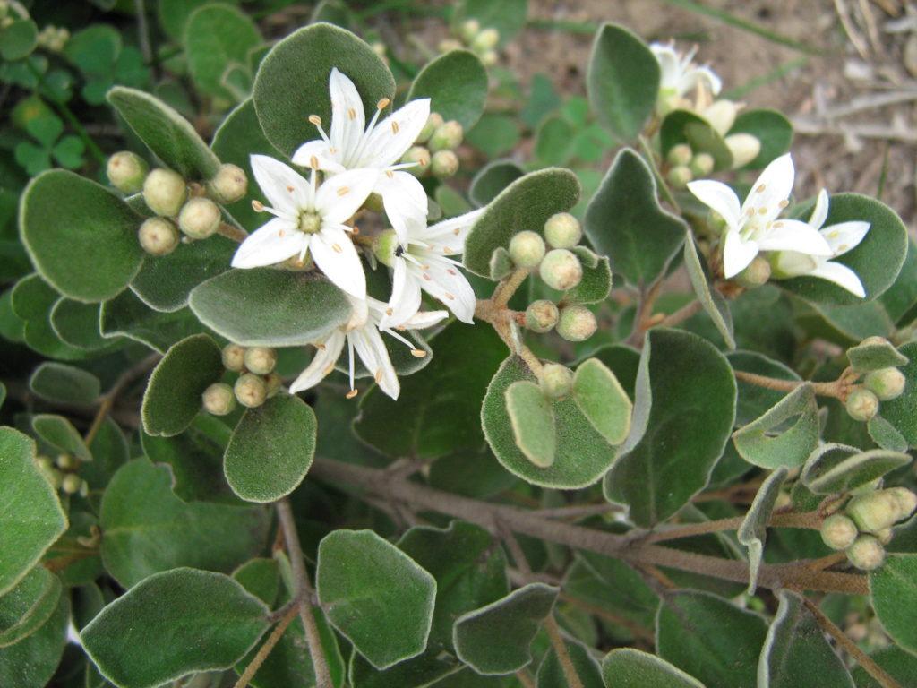Native wild flowers.