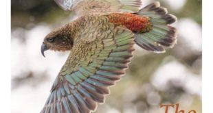 The Brilliance of Birds