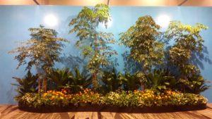 Themed wall garden