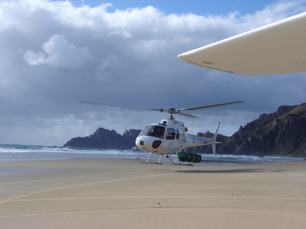 Unlike the kakapo they come to care for volunteers take to the air to reach the island.