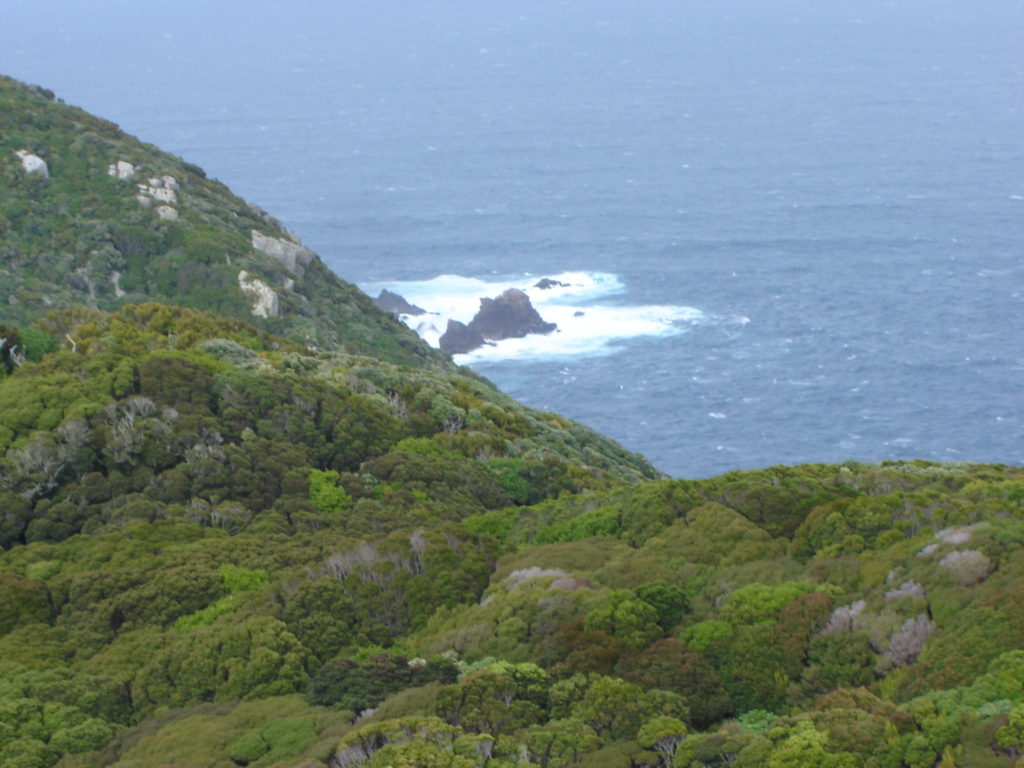 View from the top of Whenua Hou Copy
