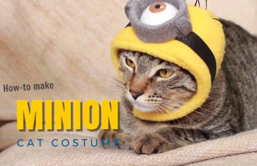 YouTube tutorial minion cat costume