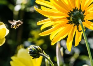 bee-in-the-approach-bee-apis-pollen-63641-large