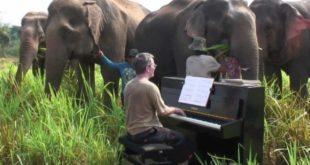 Beethoven For Elephants
