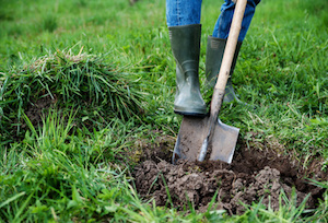 Man digs a hole in the ground for planting trees