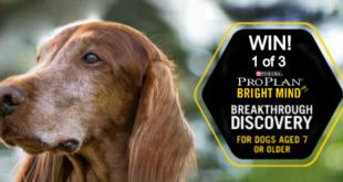 banner purina proplan brightmind dog food