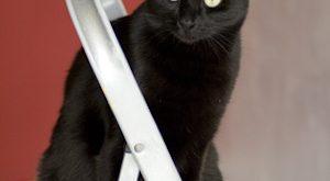 chat noir sur escabeau