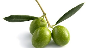 raw green olives with leaves, isolated
