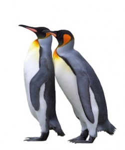 Two emperor penguin isolated over white