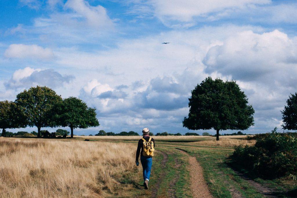 walk, field