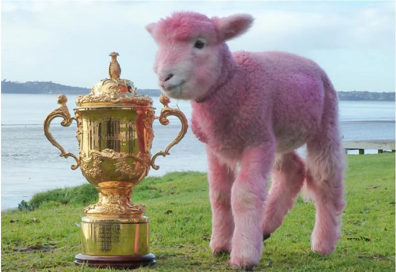 pink-winner