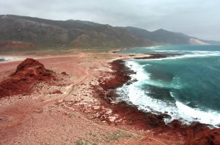 Socotra Island – Alien Life on Earth