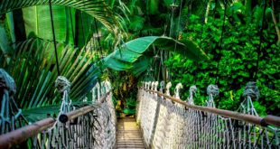 suspension bridge amazon