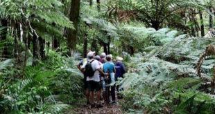 tramprainforest