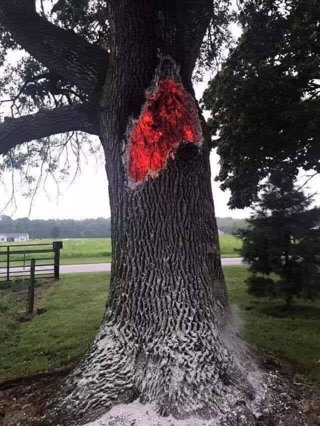 tree burning from inside after lightning strike