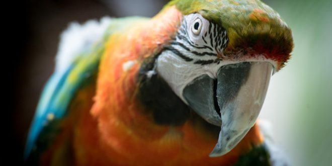 Joke parrot burglar