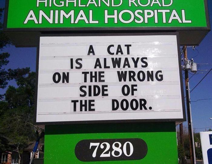 vet-signs-59ae5498a8104__700