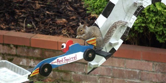 video amazing squirrel grand pri