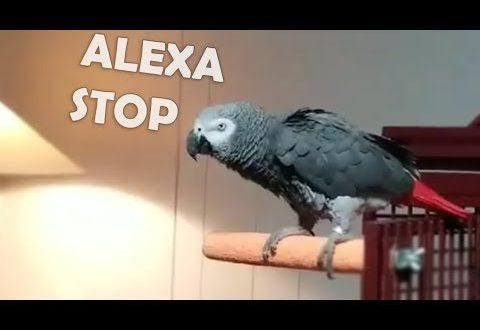 video bird hates music so he tur